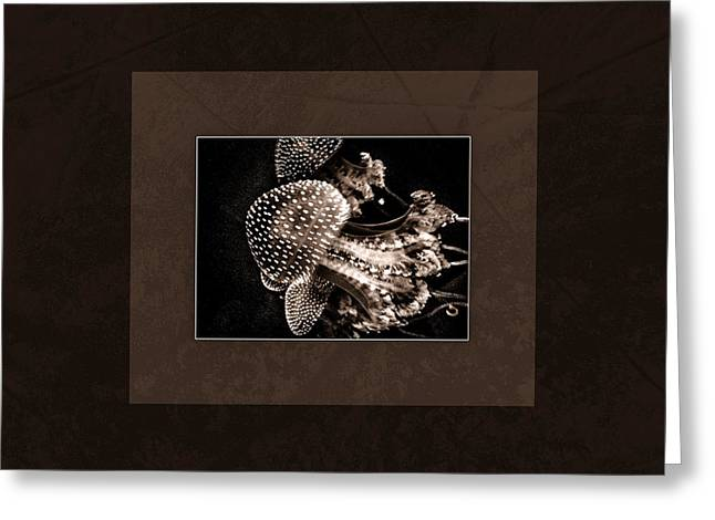 Jelly Fish Greeting Cards - Deep Brown Jelly Fish Cnidarian Quallen Greeting Card by Mona Stut