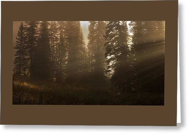 Dappled Light Photographs Greeting Cards - Deep Forest Mist and Sunbeams Greeting Card by Thomas Schoeller
