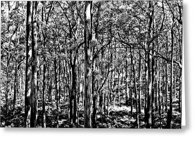 Black And White Nature Landscapes Greeting Cards - Deep Forest BW Greeting Card by Az Jackson