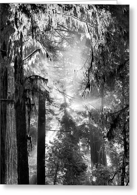 Mystical Landscape Greeting Cards - Deep Forest Light Greeting Card by Leland D Howard