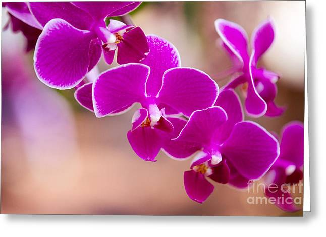 Deep Fuchsia Orchids  Greeting Card by A New Focus Photography