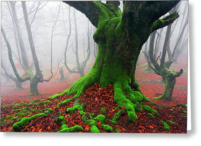 Pais Vasco Greeting Cards - Deep Of The Forest Greeting Card by Mikel Martinez de Osaba