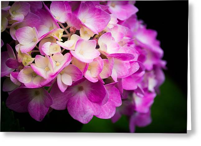 Purple Hydrangeas Greeting Cards - Deep Purples Greeting Card by Parker Cunningham