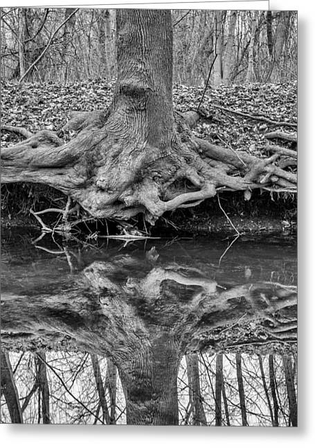 Tree Roots Greeting Cards - Deep Roots Exposed 02 Greeting Card by Chris Tobias