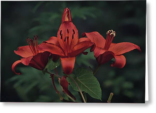 Crimson Lilies Greeting Cards - Deep Scarlets Greeting Card by Skeeze