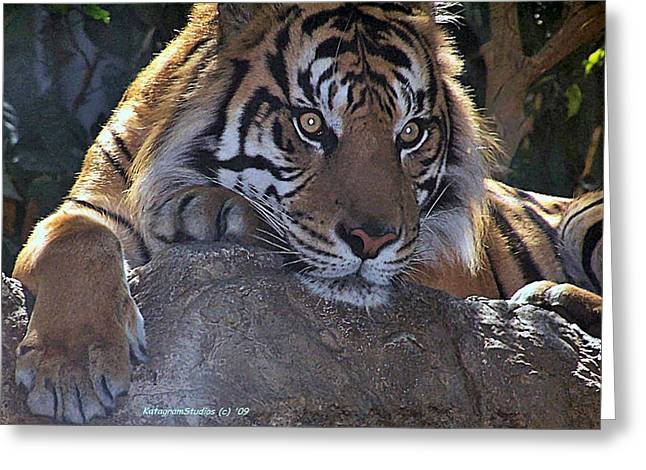 Deep Thought Greeting Card by KatagramStudios Photography