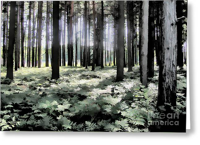 Nature Greeting Cards - Deep Woods Greeting Card by Betsy Zimmerli