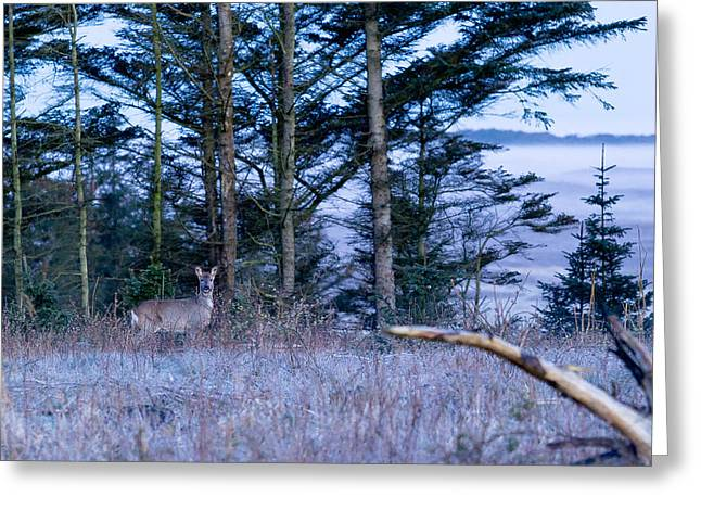 Deer And Fog Greeting Card by Eric Sloan