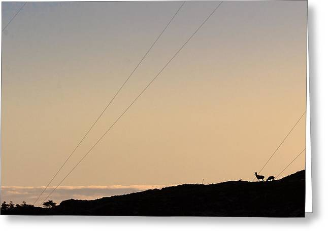 Deer And Mast Greeting Card by Eric Sloan