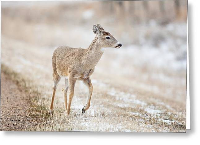 Cypress Hills Provincial Park Greeting Cards - Deer By Road Greeting Card by Brenda Carson