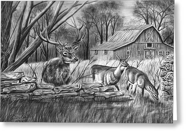 Graphite Greeting Cards - Deer Field  Greeting Card by Peter Piatt