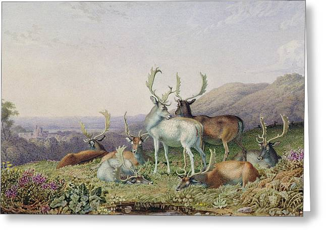 Nature Scene Paintings Greeting Cards - Deer in a Landscape Greeting Card by George the Younger Barret