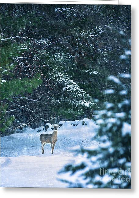 Deer In A Snowy Glade Greeting Card by Diane Diederich