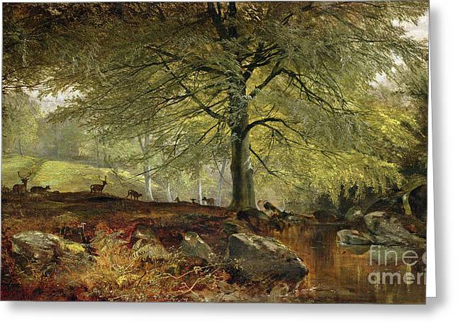 Stream Greeting Cards - Deer in a Wood Greeting Card by Joseph Adam
