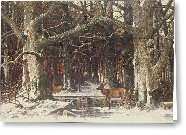 Deer In The Forest Greeting Card by G Schneyder