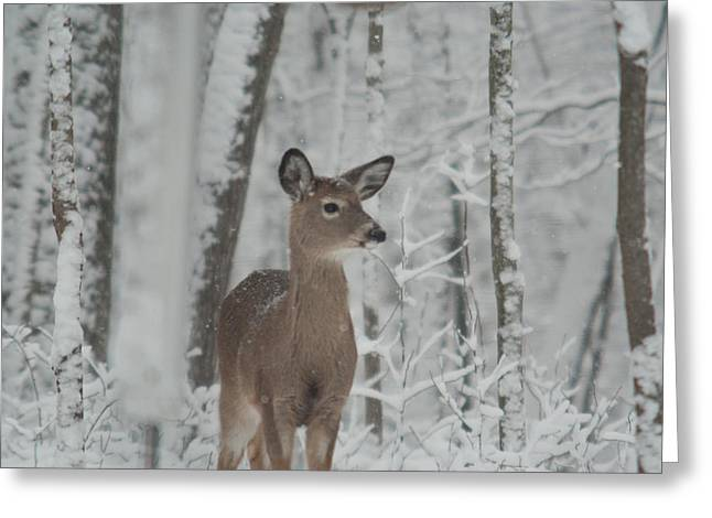 Pause Greeting Cards - Deer In The Snow Greeting Card by Douglas Barnett