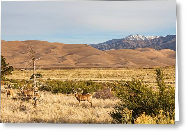 Grazing Snow Greeting Cards - Deer on the Plains Great Colorado Sand Dunes Greeting Card by James BO  Insogna