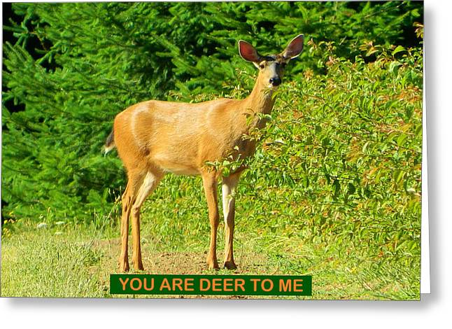 Anti Greeting Cards - Deer To Me Greeting Card by Gallery Of Hope