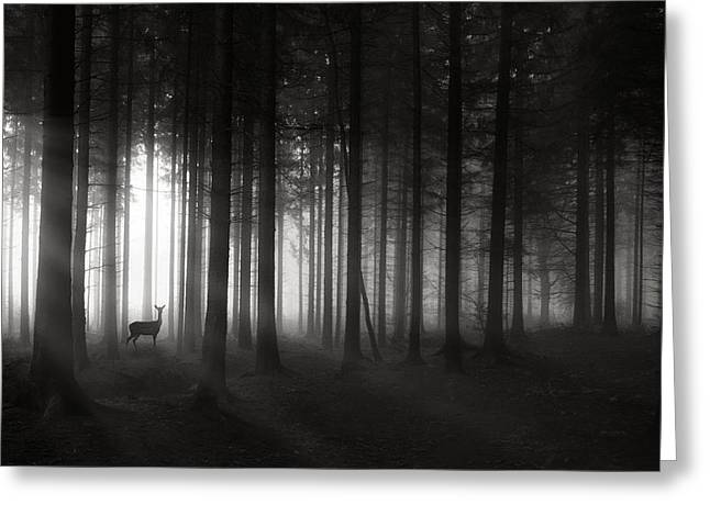 Deer Photographs Greeting Cards - Deer`s Morning Greeting Card by Christoph Hessel