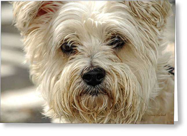 Dog Hair Greeting Cards - Definition Of Cute Greeting Card by Donna Blackhall