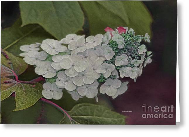Deland Garden Gem Greeting Card by Deborah Benoit