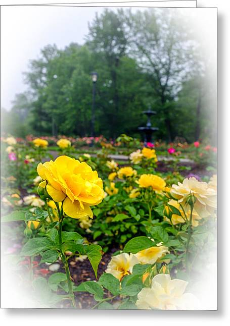 Delaware Park Yellow Roses Greeting Card by Chris Bordeleau