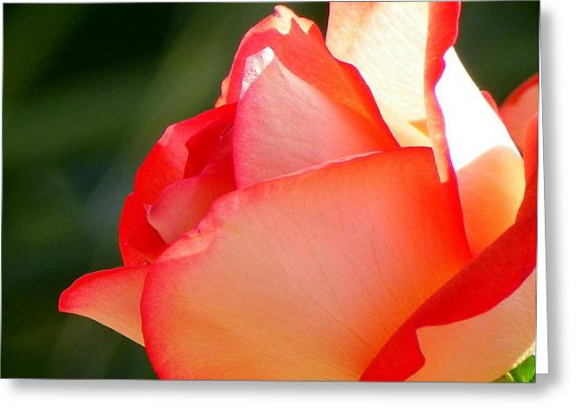 Delicate Beauty Greeting Card by KAREN WILES