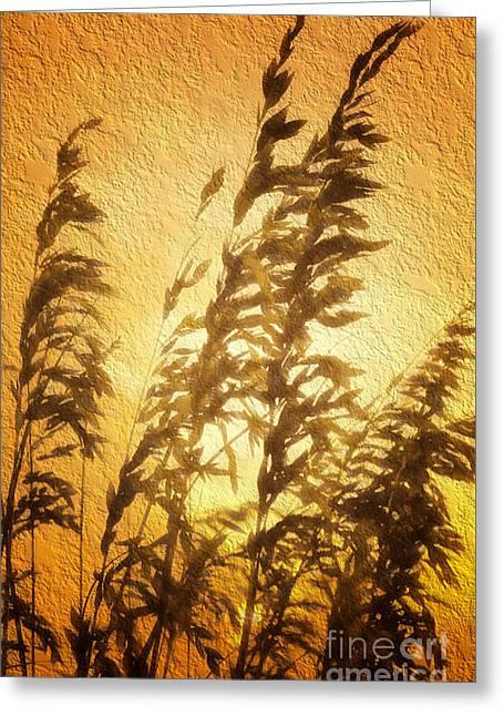 Ocean Photos Paintings Greeting Cards - Delicate Dawn II Greeting Card by Dan Carmichael