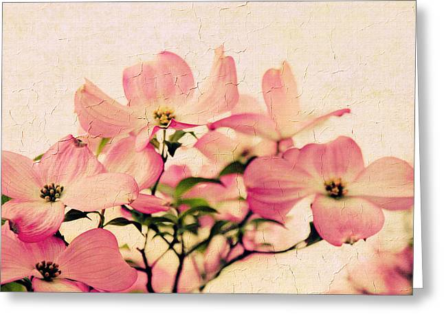 Dogwood Greeting Cards - Delicate Dogwood  Greeting Card by Jessica Jenney