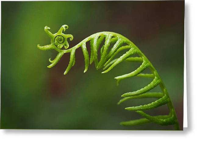 Green Leaves Greeting Cards - Delicate Fern Frond Spiral Greeting Card by Rona Black