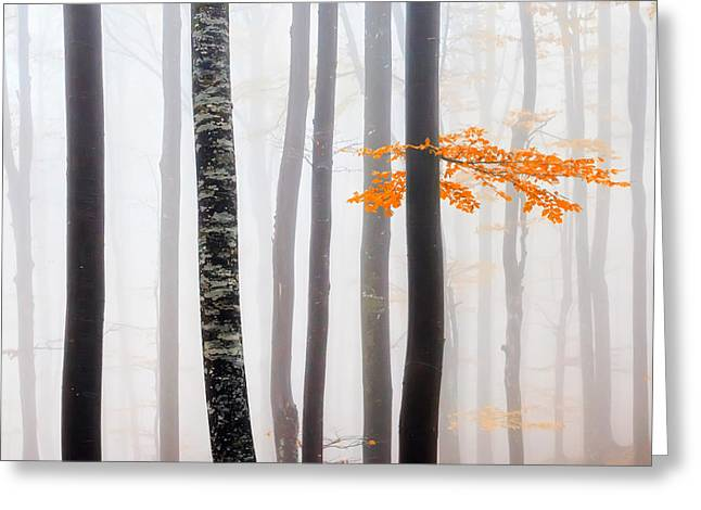 Forest Greeting Cards - Delicate Forest Greeting Card by Evgeni Dinev