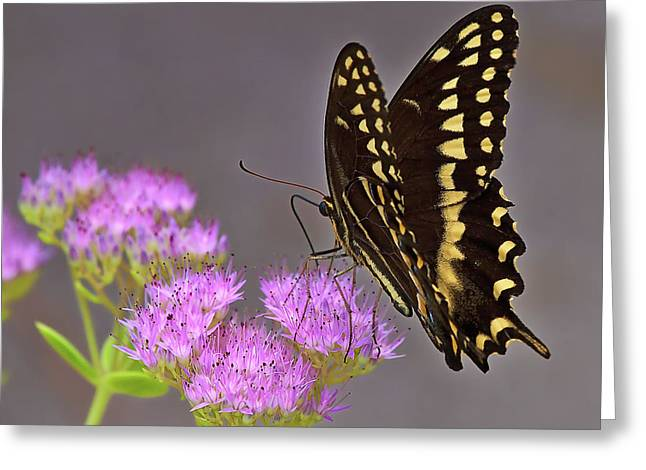 Mike Covington Greeting Cards - Delicate Nature Greeting Card by Mike Covington