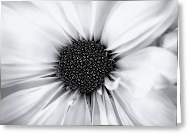Delicate Petals Greeting Card by Andrew Soundarajan