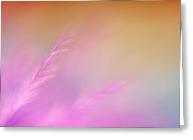 Delicate Pink Feather Greeting Card by Scott Norris