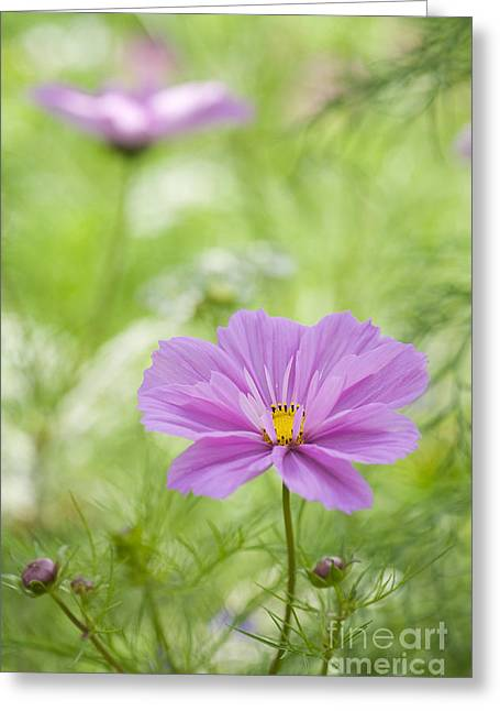 Color Colorful Greeting Cards - Delicate Pink Greeting Card by Tim Gainey