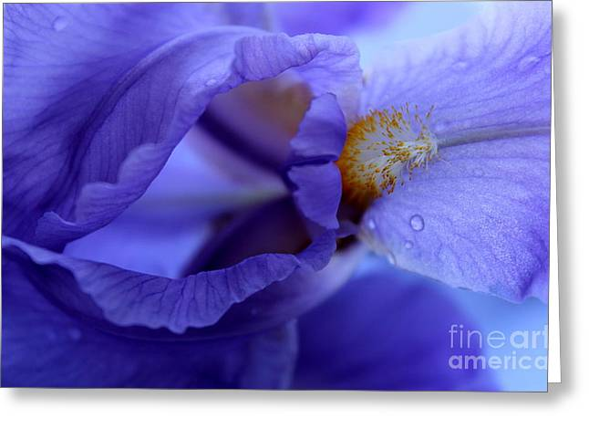 Delicate Sensation Greeting Card by Krissy Katsimbras