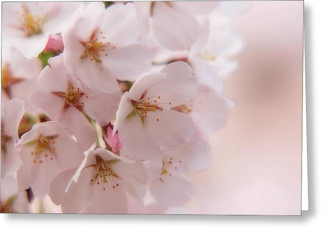Muted Greeting Cards - Delicate Spring Blooms Greeting Card by Angie Tirado