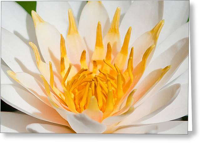 Delicate Touch Greeting Card by Az Jackson
