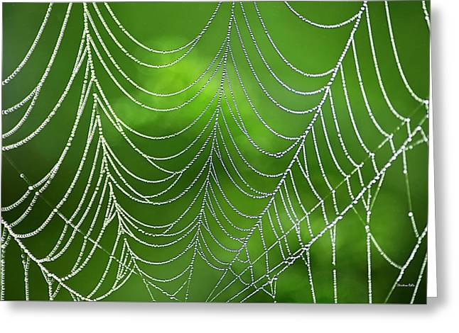 Delicate Web Abstract Greeting Card by Christina Rollo