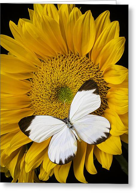 Delightful White Butterfly Greeting Card by Garry Gay