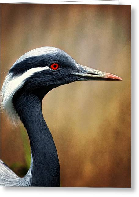 Demoiselles Greeting Cards - Demoiselle Crane Greeting Card by Al  Mueller