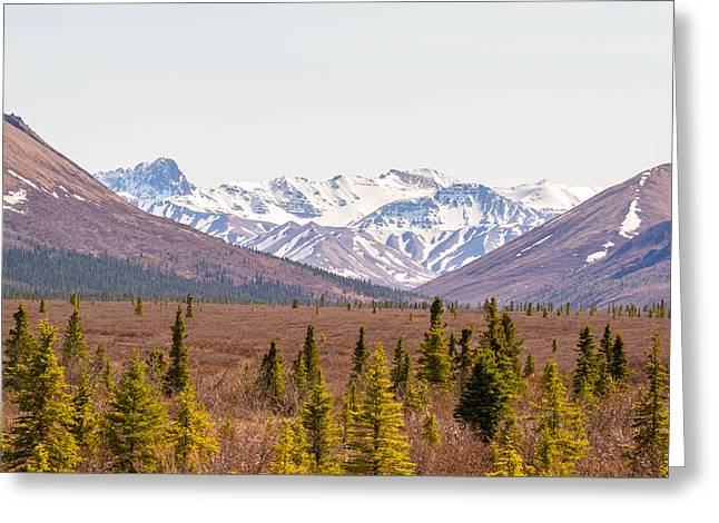 Black Greeting Cards - Denali Wilderness Beauty Greeting Card by Allan Levin