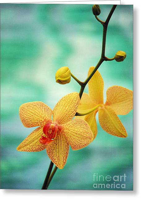 Blue Green Greeting Cards - Dendrobium Greeting Card by Allan Seiden - Printscapes