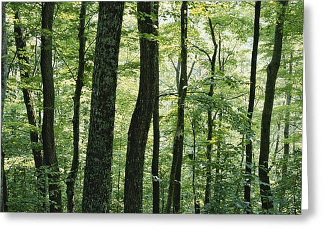 Pisgah Greeting Cards - Dense Temperate Rain Forest Greeting Card by Rich Reid