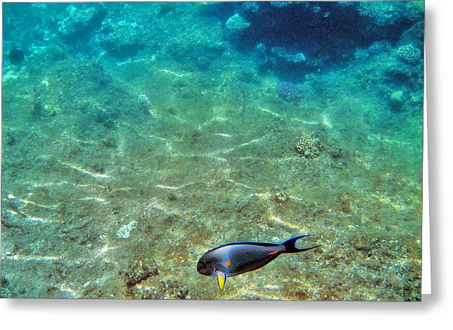 Mccoy Greeting Cards - Depth. The yellow fin. Greeting Card by Andy Za