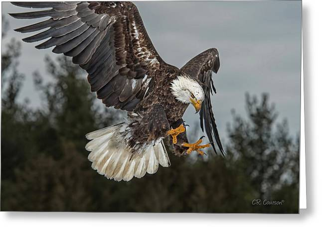 Descending Eagle Greeting Card by CR  Courson