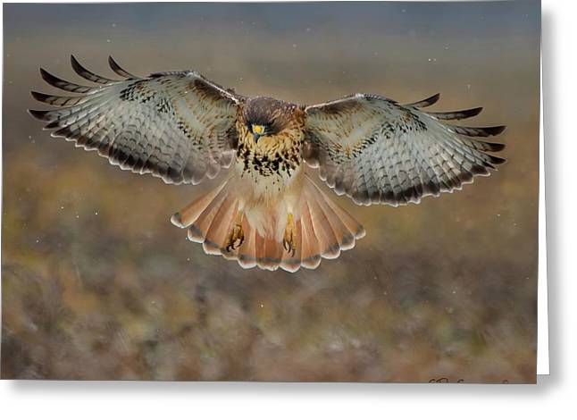 Descending For The Kill Greeting Card by CR  Courson