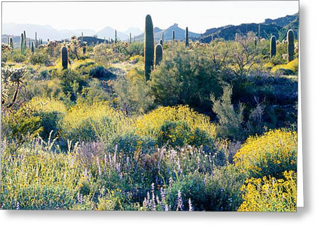 Desert Az Greeting Card by Panoramic Images