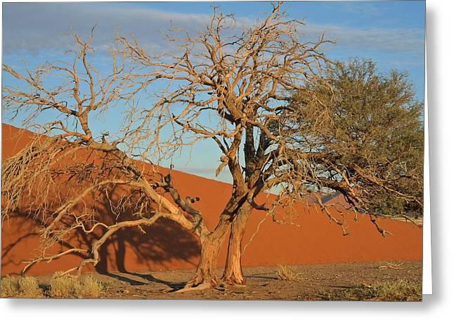 Recently Sold -  - Sanddunes Greeting Cards - Desert Beauty Greeting Card by Joe  Burns