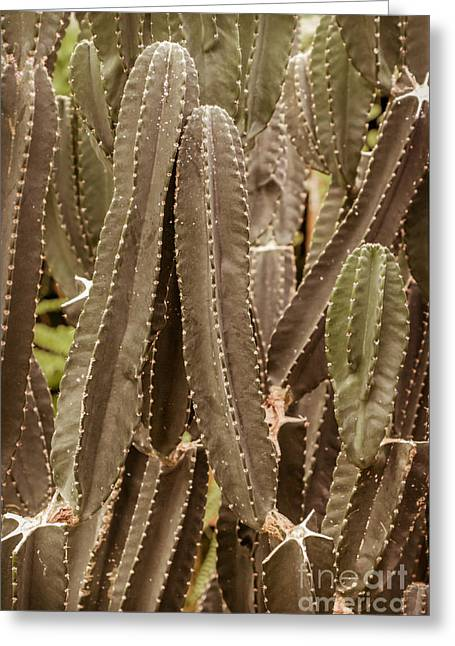 Large Poster Greeting Cards - Desert Cacti Succulents Greeting Card by Lucid Mood